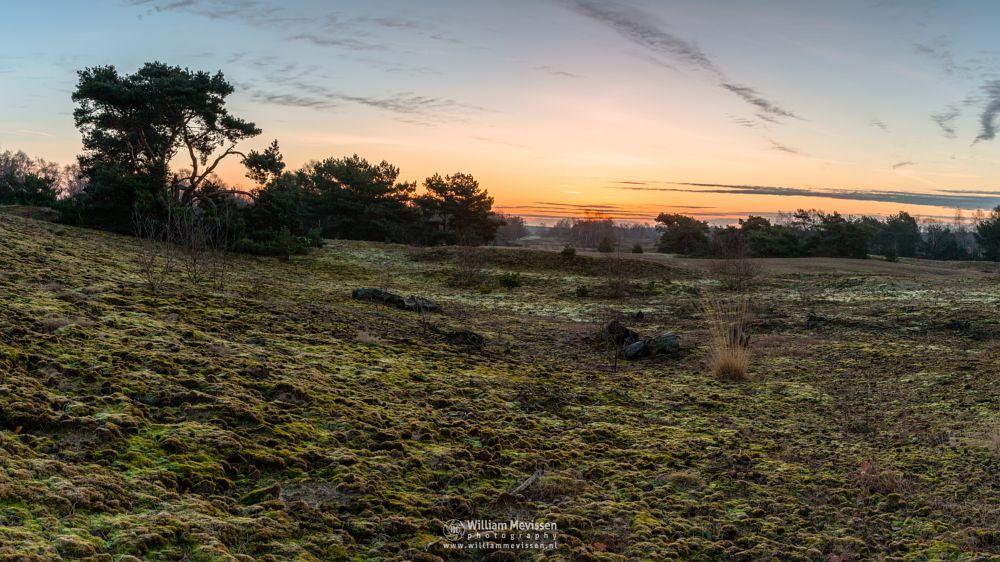 Photo in Landscape #bergerheide #maasduinen #limburg #noord-limburg #bergen #nieuw-bergen #nature #light #mood