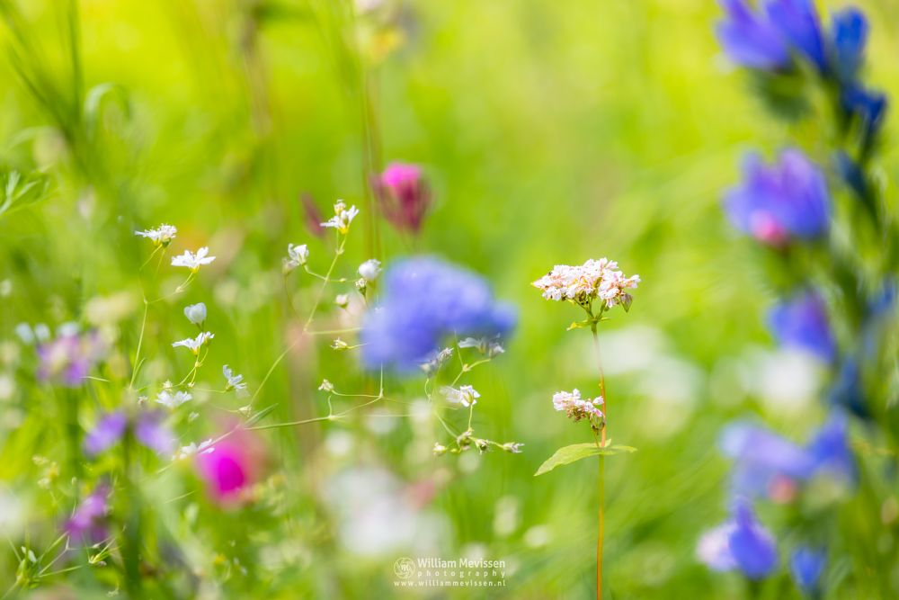 Photo in Nature #flower #flowers #bokeh #macro #colorful #colors #summer #spring