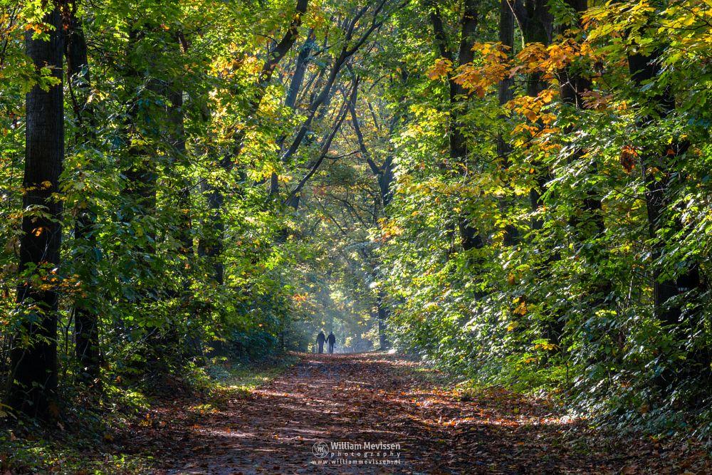Photo in Nature #geijsteren #venray #oostrum #landgoed geijsteren #limburg #noord-limburg #nature #forest #sunrays #autumn #trees #walking #stroll