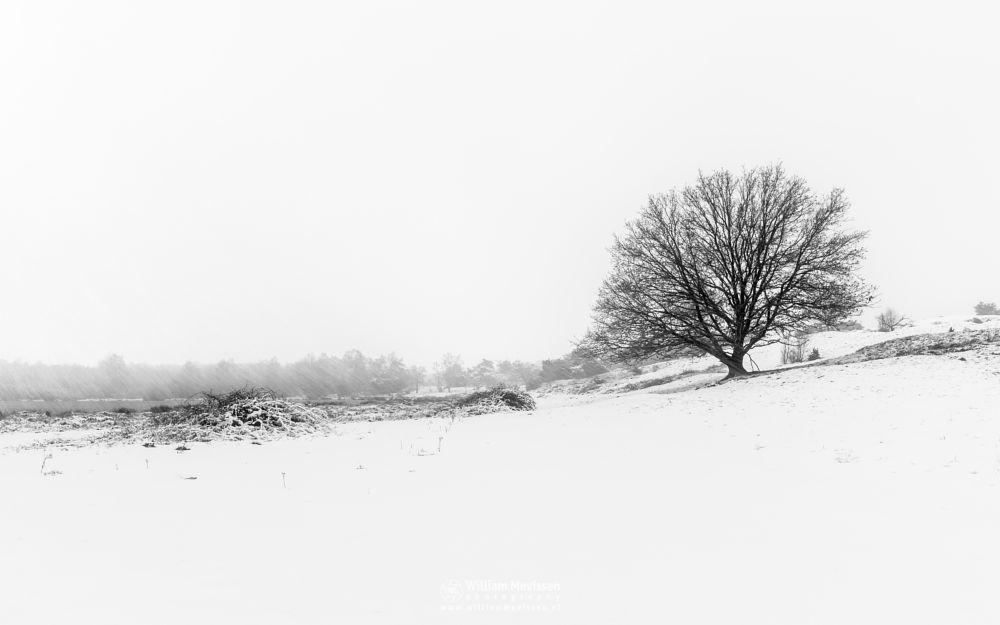 Photo in Black and White #bergerheide #maasduinen #limburg #nieuw-bergen #bergen #noord-limburg #winter #snow #tree #silhouette #silhouettes #oak #blackandwhite #bw #white #winterscenery