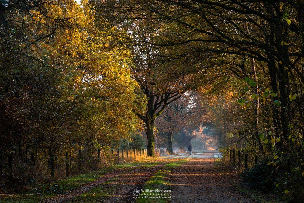 Photo in Nature #bergerheide #forest #woods #maasduinen #limburg #noord-limburg #nieuw-bergen #bergen #nature #light #trees #mood #walking #dog #surise