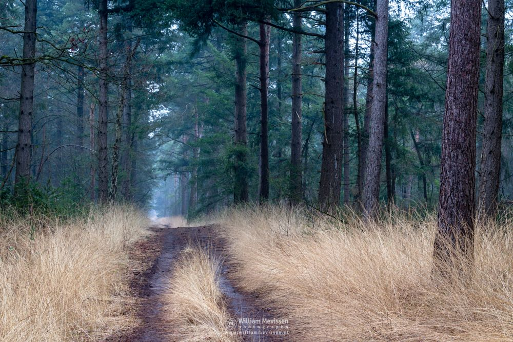 Photo in Nature #venray merselo overloon for #venray #merselo #overloon #forest #ballonzuil #limburg #noord-limburg #nature #ballonzuilbossen #ballonzuilbos #light #woods #trees #winter #grasses