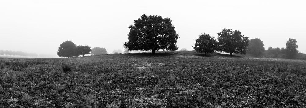 Photo in Black and White #eckeltsebergen eckeltse heat #eckeltsebergen #eckeltse #heather #mist #fog #maasduinen #limburg #nieuw-bergen #noord-limburg #bergen #nature #light #trees #mood #dunes #pano #blackandwhite #panorama