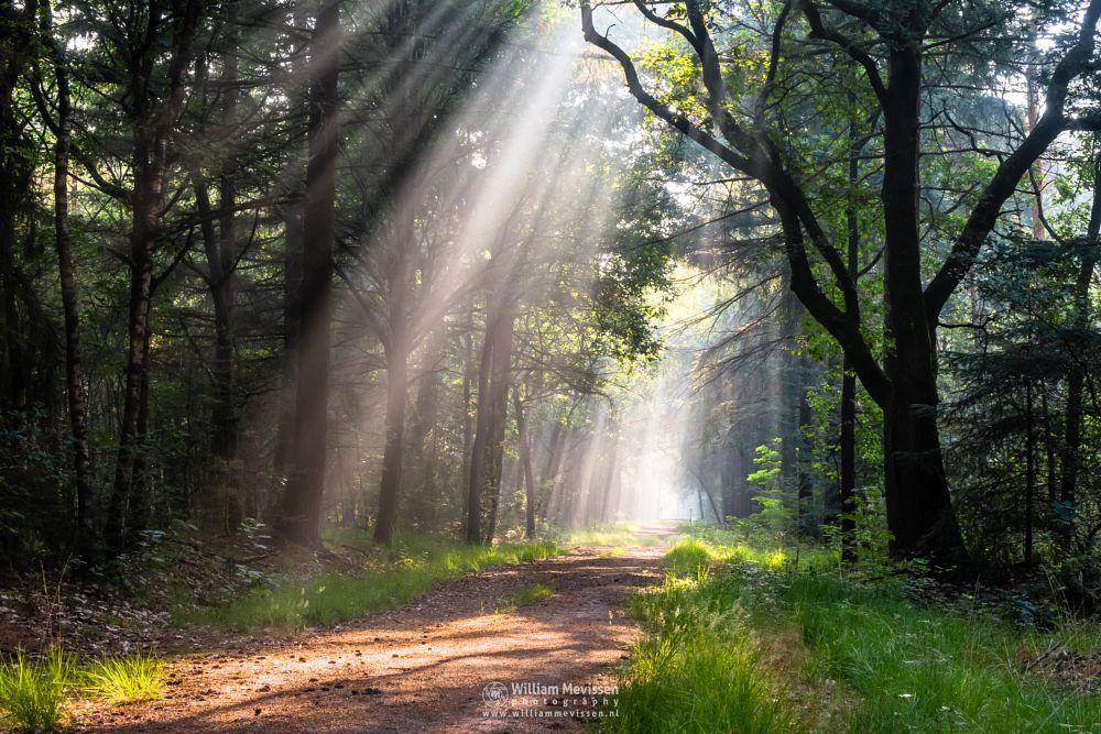 Photo in Nature #venray #limburg #noord-limburg #merselo #nature #ballonzuilbossen #forest #rays #beams #lightrays #enlightened #path