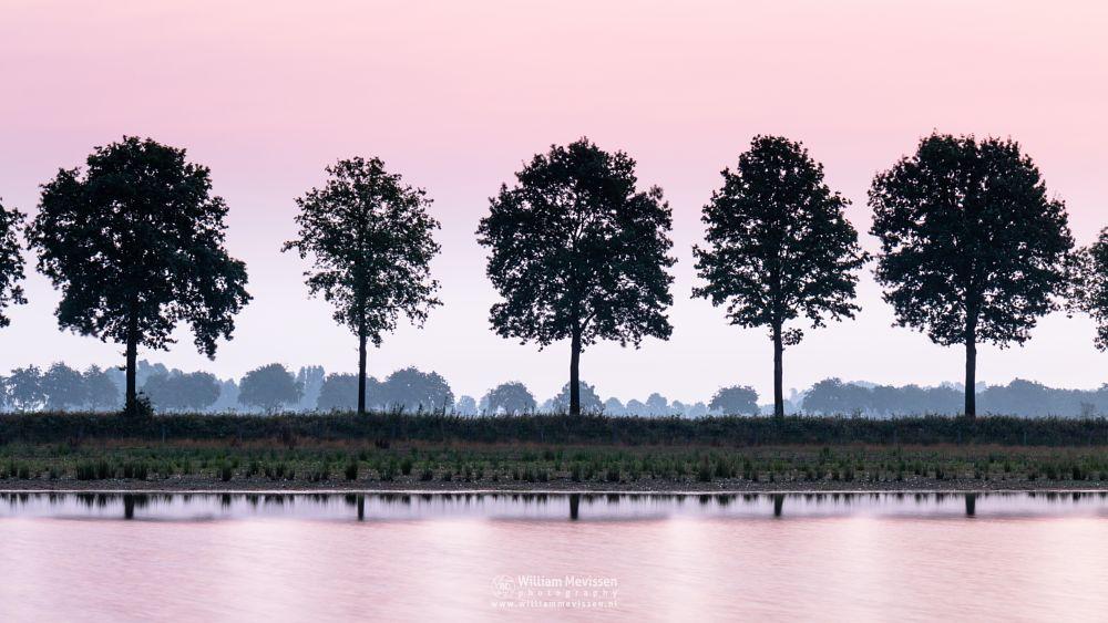 Photo in Nature #forest #woods #heathland #maasduinen #limburg #noord-limburg #nieuw-bergen #bergen #national park #nature #light #land #trees #ceresweg #eckeltsebergen #twilight #pink #sunrise #fen #cloudy