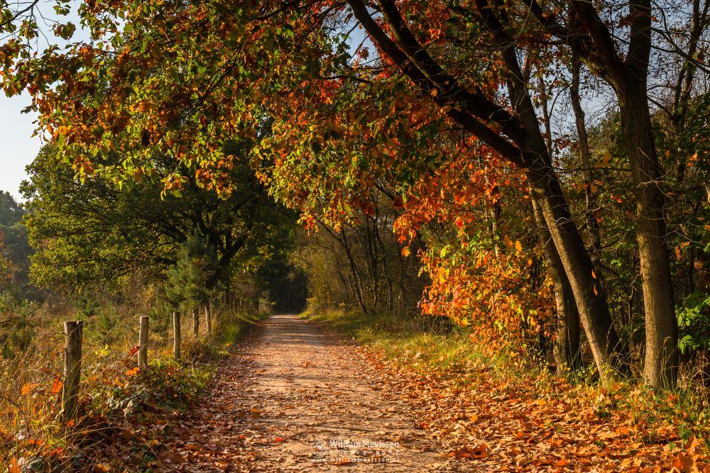 Photo in Nature #bergerheide #forest #maasduinen #limburg #autumn #tunnel #sunrise #nature #bergen #noord-limburg #nieuw-bergen #woods #tree