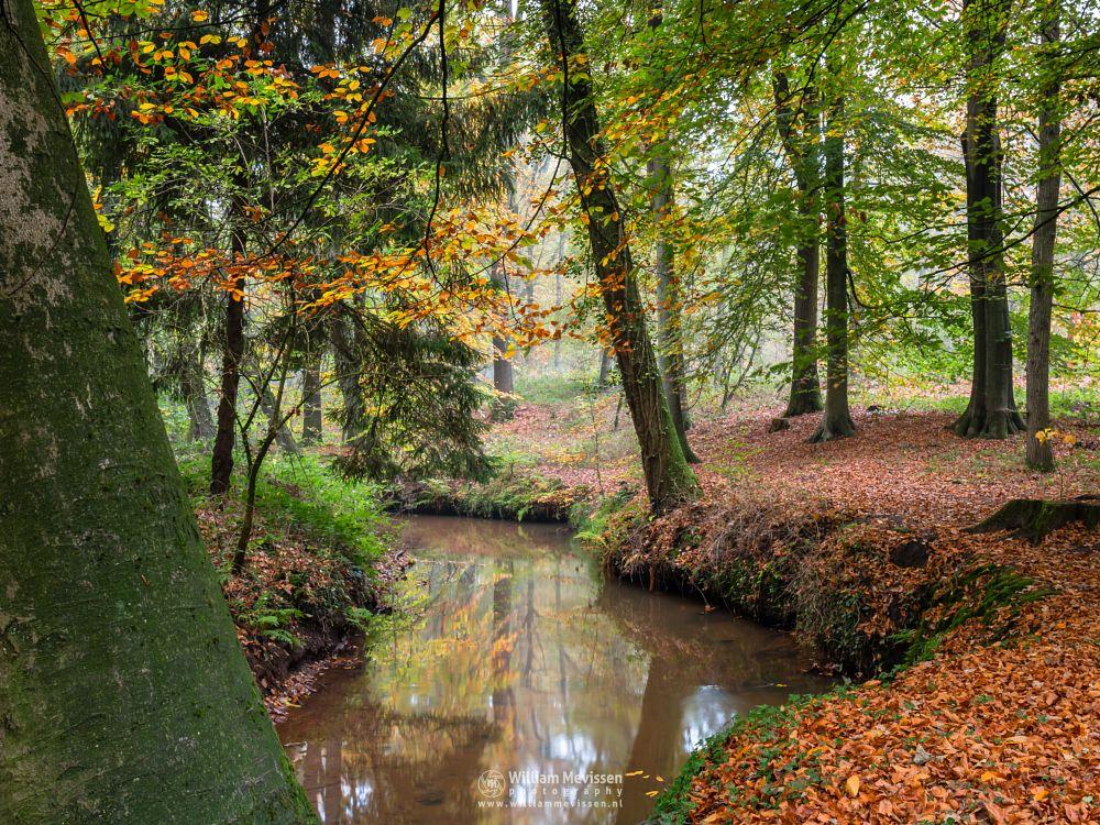 Photo in Nature #geijsteren #oostrum #venray #forest #woods #autumn #geysteren #reflections #meandering #oostrumse beek #noord-limburg #limburg #brook #nature #landgoed geijsteren