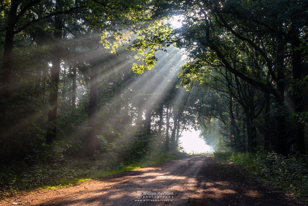 Photo in Nature #venray #limburg #merselo #ballonzuilbossen #netherlands #forest #woods #silhouette #sunlight #mood #tree #rays #beams #lightrays #noord-limburg