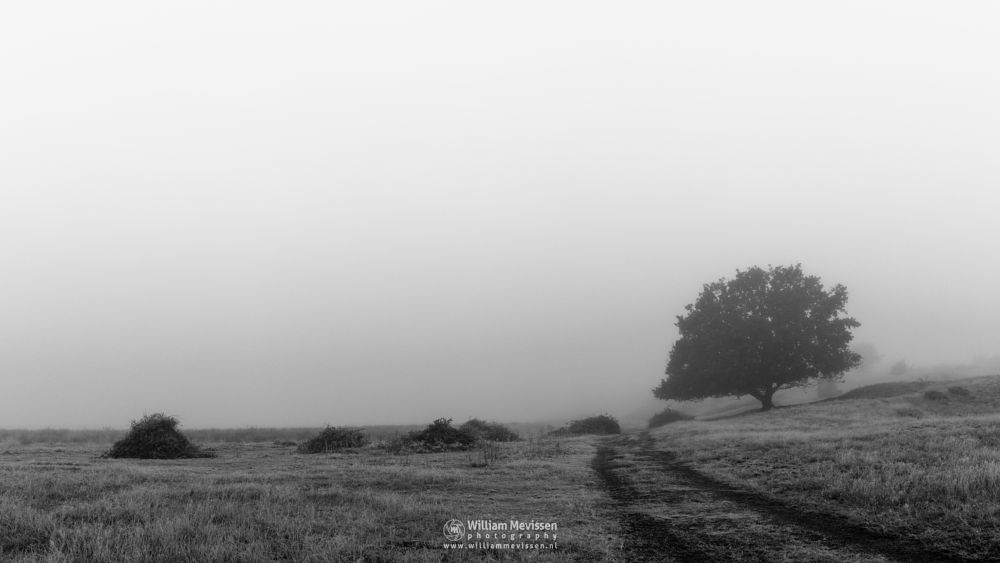 Photo in Landscape #bergerheide #forest #woods #maasduinen #limburg #noord-limburg #nieuw-bergen #bergen #nature #mist #mood #fog