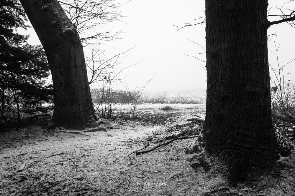Photo in Black and White #mist #limburg #noord-limburg #venray #annaterrein #annapark #nature #frost #winter #snow #path #trees #forest
