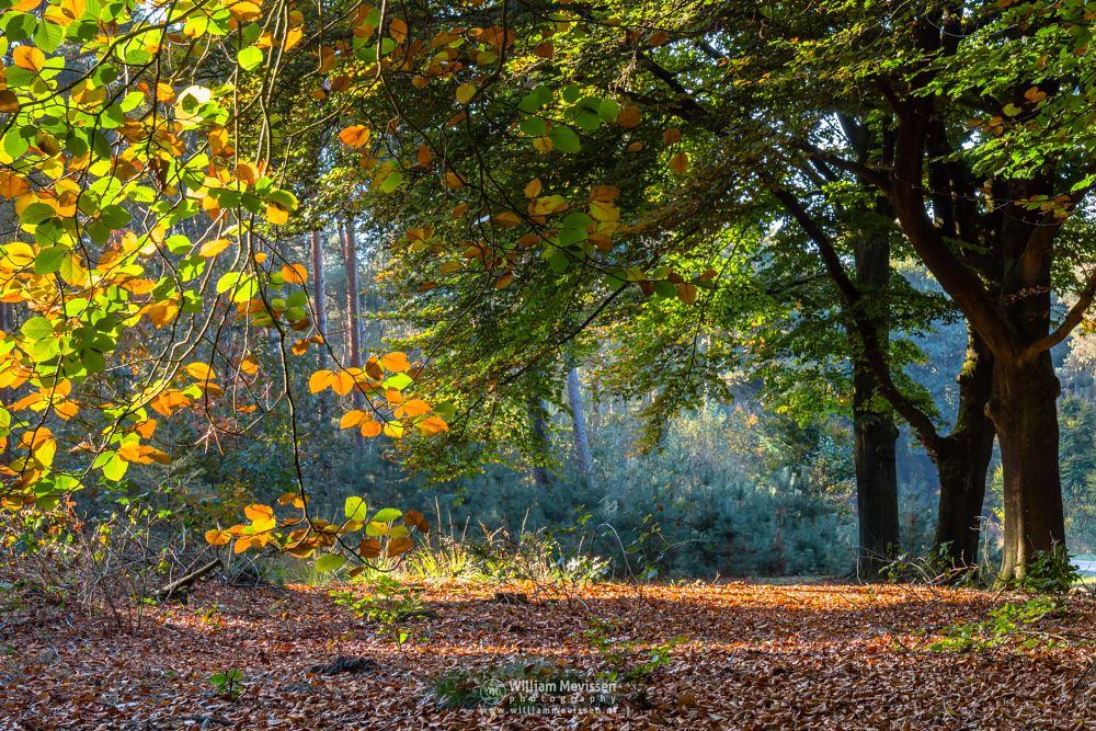 Photo in Nature #mood #foliage #sunlight #sun #autumn #trees #ballonzuilbossen #nature #forest #netherlands #limburg #merselo #venray #noord-limburg