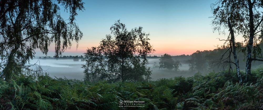 Photo in Landscape #maasduinen #limburg #noord-limburg #wellerlooi #bergen #sunrise #mist #fern #hamert #dehamert #nature #twilight