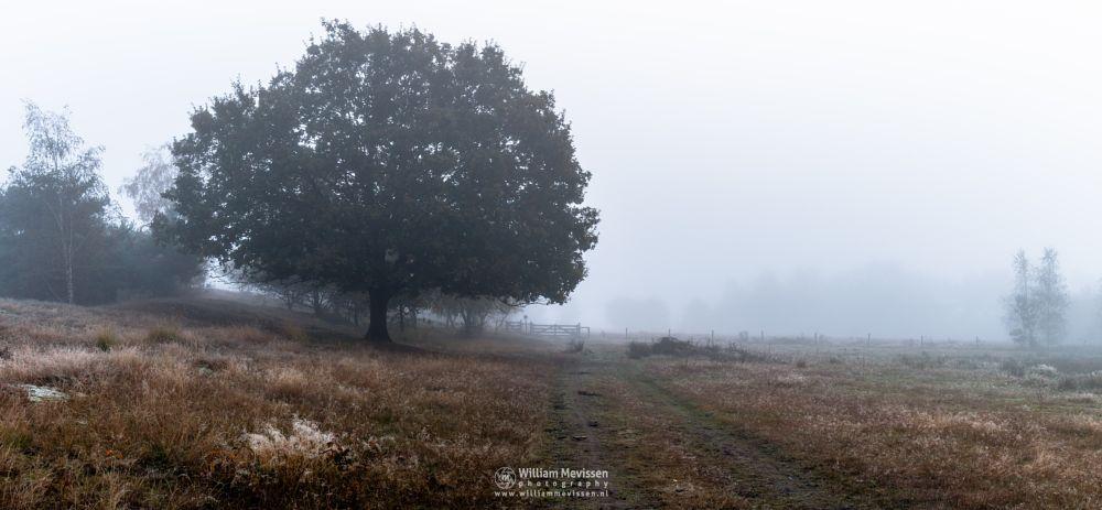Photo in Landscape #bergerheide #forest #heathland #maasduinen #limburg #noord-limburg #nieuw-bergen #bergen #t #trees #autumn #mist #fog #mood #fen #oak #serene
