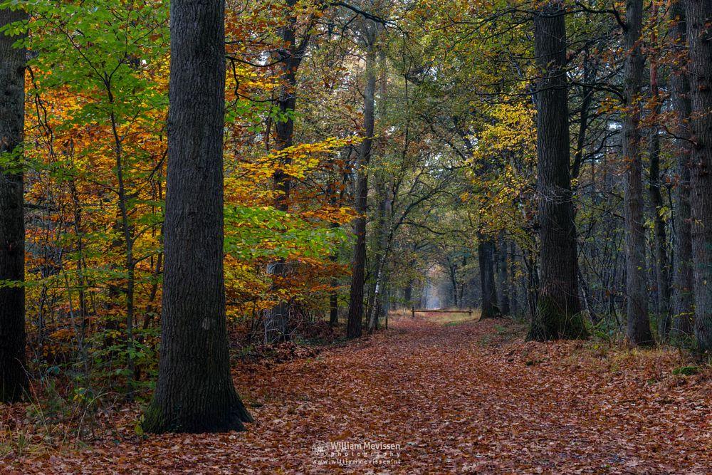 Photo in Nature #geijsteren #venray #oostrum #landgoed geijsteren #limburg #noord-limburg #nature #forest #woods #autumn #trees #path #fall