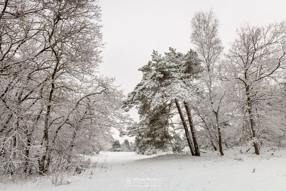 Photo in Landscape #boshuizerbergen #boschhuizerbergen #limburg #venray #forest #netherlands #woods #nature #noord-limburg #snow #winter #winterlandscape #winterscape #trees