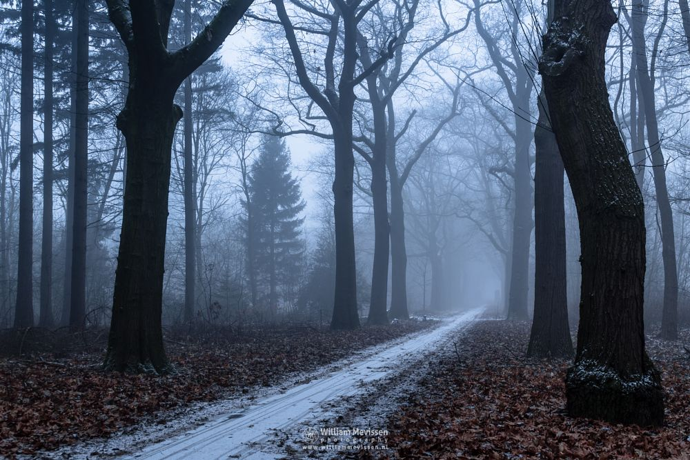 Photo in Nature #mist #limburg #noord-limburg #venray #annaterrein #annapark #nature #winter #mood #snow #path #fading #trees #forest #frost #light #netherlands