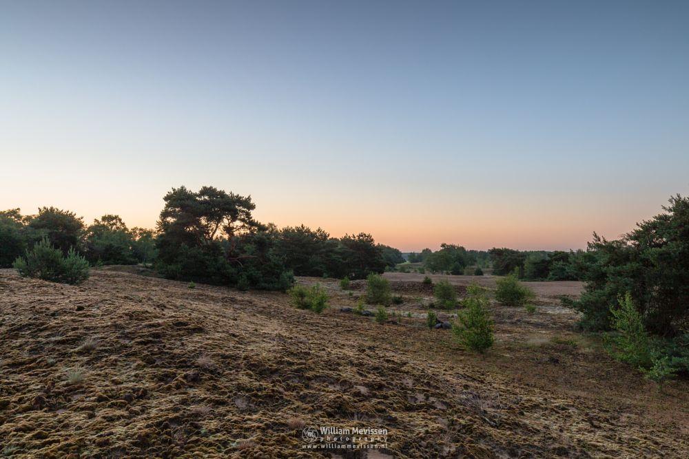 Photo in Landscape #bergerheide #forest #maasduinen #limburg #noord-limburg #nieuw-bergen #bergen #nature #light #tree #twilight #sun