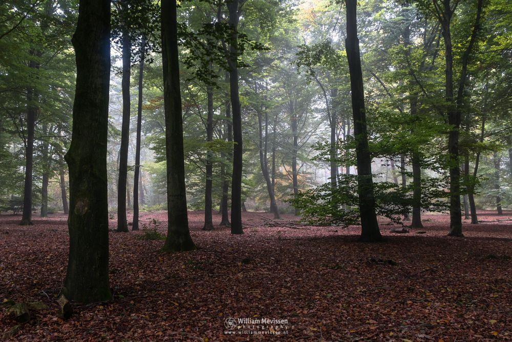 Photo in Nature #venray #limburg #noord-limburg #nature #merselo #ballonzuilbossen #netherlands #autumn #beeches #woods #forest #silhouettes #trees #fog #tree #mood #mist #green