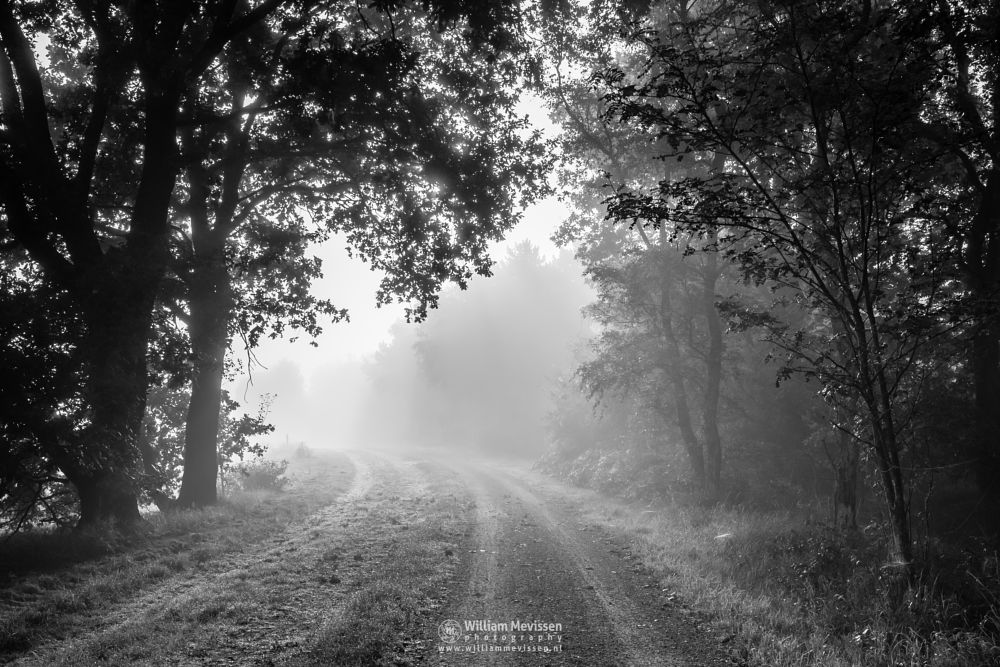 Photo in Black and White #limburg #nature #fen #trees #summer #mood #mist #blackandwhite #grasses #sunrise #bergerheide #woods #forest #maasduinen #noord-limburg #bergen #nieuw-bergen #light
