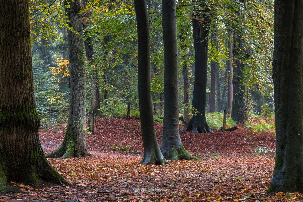 Photo in Nature #geijsteren #venray #oostrum #trees #tree #autumn #geysteren #woods #forest #nature reserve #nature #noord-limburg #limburg