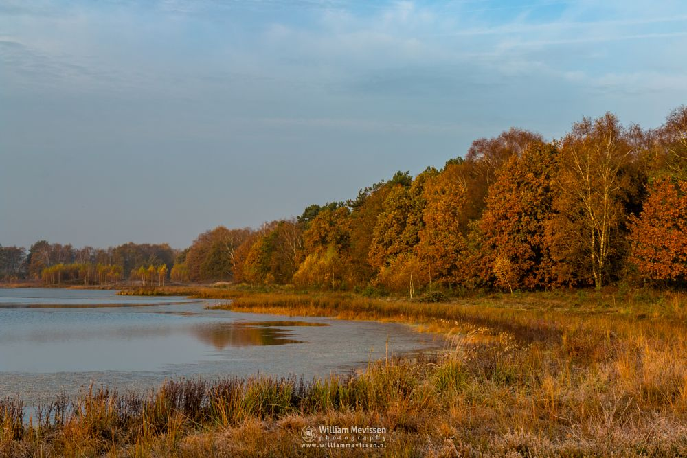 Photo in Landscape #bergerheide #forest #maasduinen #limburg #noord-limburg #nieuw-bergen #bergen #autumn #nature #lelieven #surise