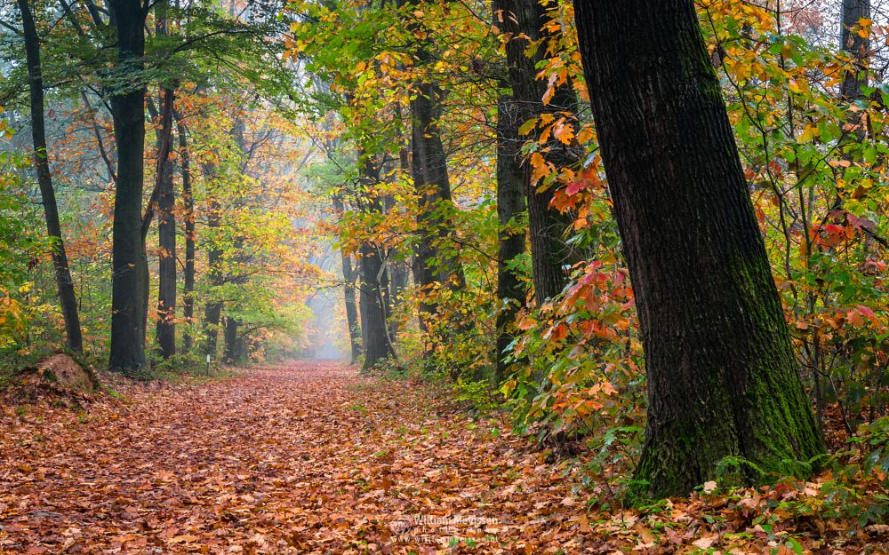 Photo in Nature #geijsteren #venray #oostrum #landgoed geijsteren #geysteren #autumn #trees #path #mist #colors #fog #limburg #noord-limburg #forest #woods