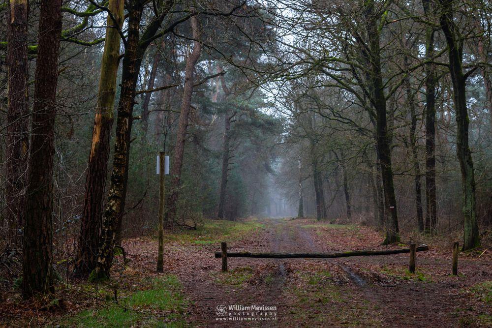Photo in Nature #geijsteren #venray #oostrum #limburg #noord-limburg #nature #forest #woods #geysteren #winter #trees #path #mood #light