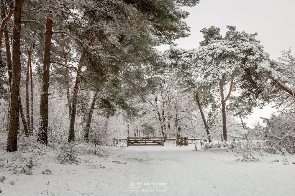 Photo in Landscape #boshuizerbergen #boschhuizerbergen #thickets #snow #winter #gate #winterlandscape #trees #winterscape #juniper #netherlands #shiftingsand #woods #forest #venray #limburg #noord-limburg #nature