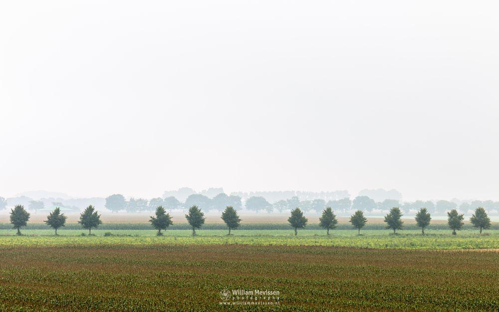 Photo in Landscape #maasduinen #eckeltsebergen #eckeltse #mist #fog #limburg #noord-limburg #nieuw-bergen #light #bergen #trees #mood #agricultural #fields