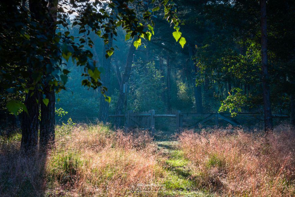 Photo in Nature #boshuizerbergen #boschhuizerbergen #limburg #noord-limburg #venray #nature #nature reserve #forest #woods #limburgs landschap #netherlands #pine #pine forest #sunrise #light #rays #landgoed geijsteren #path #beams #gate #fence #leaves #sunlit