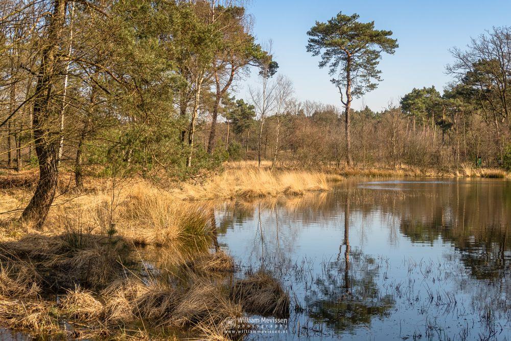 Photo in Landscape #nature #fen #swamp #spring #grasses #reflections #serenity #trees #branches #golden #netherlands #forest #velden #venlo #ravenvennen #lomm #limburg #noord-limburg #woods