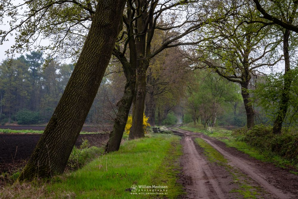 Photo in Landscape #venray #limburg #noord-limburg #merselo #nature #ballonzuilbossen #netherlands #forest #path #mood #farmland