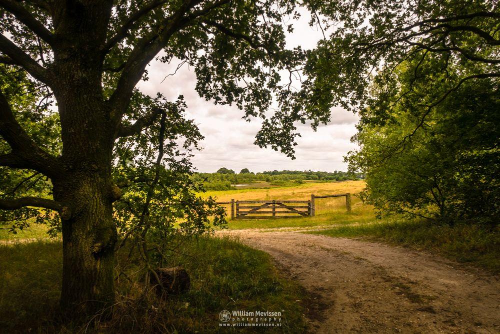 Photo in Nature #fen #heerenven #heathland #maasduinen #limburg #wellerlooi #bergen #nature #trees #grasses #dehamert #gate #hamert #grenzweg #water #noord-limburg