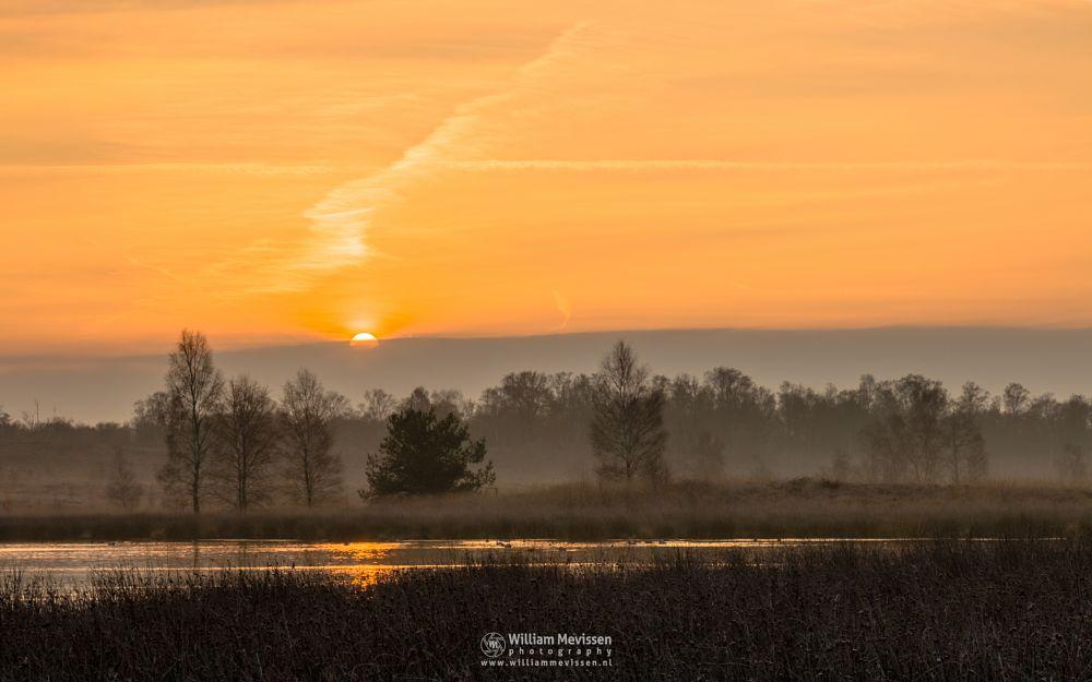 Photo in Landscape #heathland #maasduinen #limburg #noord-limburg #wellerlooi #bergen #nature #light #sunrise #trees #dehamert #hamert