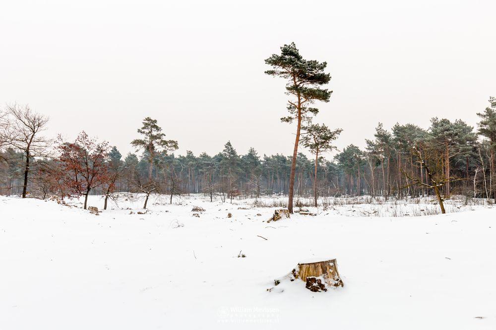 Photo in Landscape #boshuizerbergen #boschhuizerbergen #limburg #venray #nature #noord-limburg #netherlands #forest #snow #winter #winterscape #trees #winterlandscape #woods