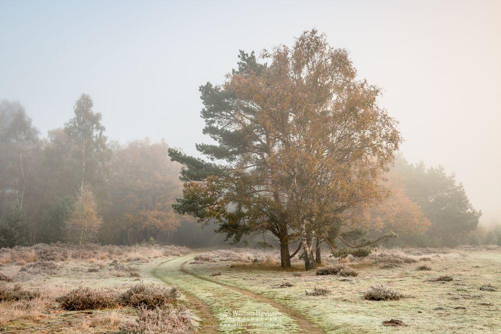 Photo in Landscape #bergerheide #woods #forest #maasduinen #limburg #nieuw-bergen #bergen #mood #autumn #noord-limburg #trees #path #frost #mist #winter #light
