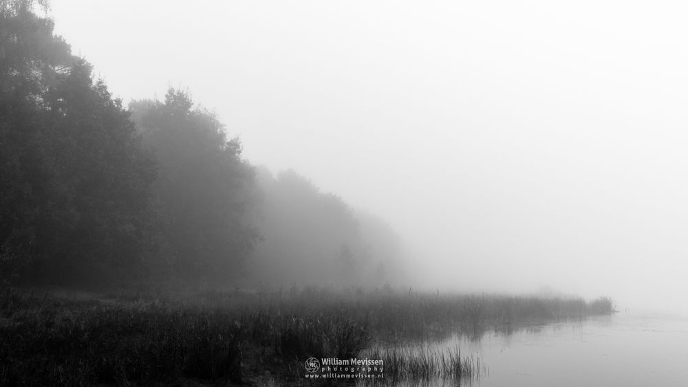 Photo in Black and White #bergerheide #maasduinen #limburg #noord-limburg #nieuw-bergen #bergen #nature #light #mist #fog #mood #fen #serene #blackandwhite #bw #bnw