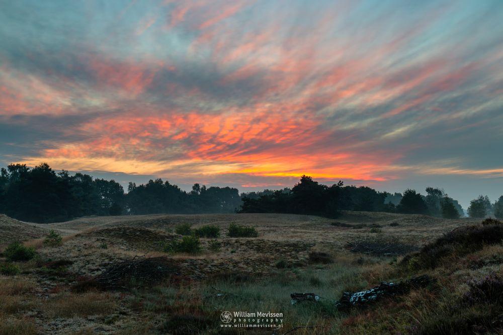 Photo in Landscape #bergerheide #forest #woods #heathland #maasduinen #limburg #noord-limburg #nieuw-bergen #bergen #national park #nature #sand #dunes #sanddunes #clouds #riverdunes #light #land #trees #moss #sunrise #sunlight #cloudy #twilight #red #fire