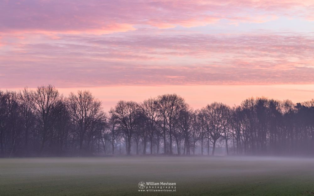 Photo in Landscape #venray limburg noord-limburg #venray #nature #limburg #noord-limburg #merselo #trees #ballonzuilbossen #ballonzuil #netherlands #winter #mist #rural #agriculture #farming #twilight