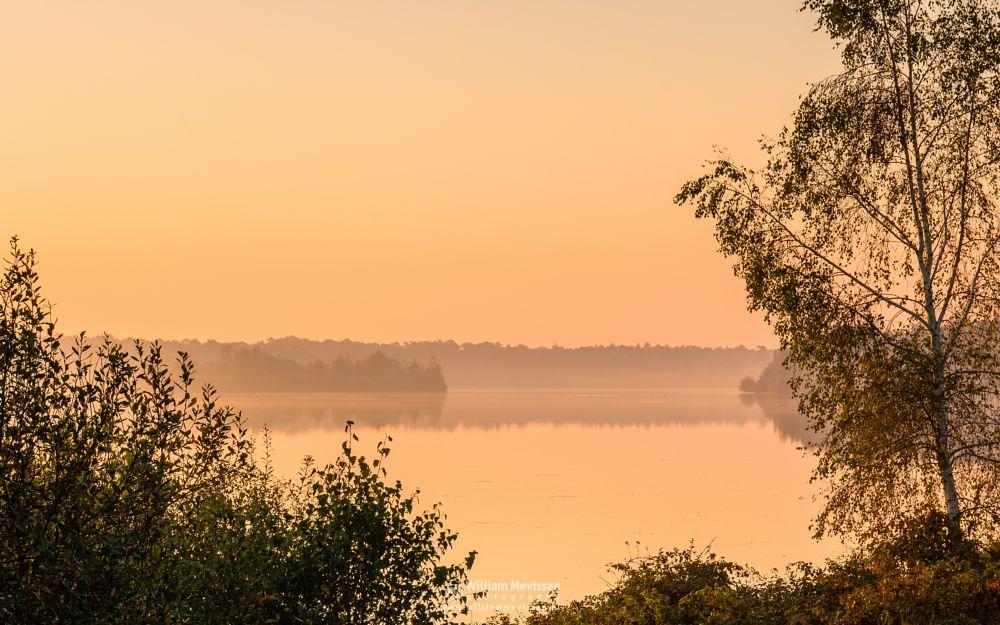Photo in Landscape #trees #pine #pine forest #forest #lake #reindersmeer #maasduinen #limburg #noord-limburg #well #national park #nature #green #sunrise #colors #light #serene #view #mist #mood #golden #goldenhour