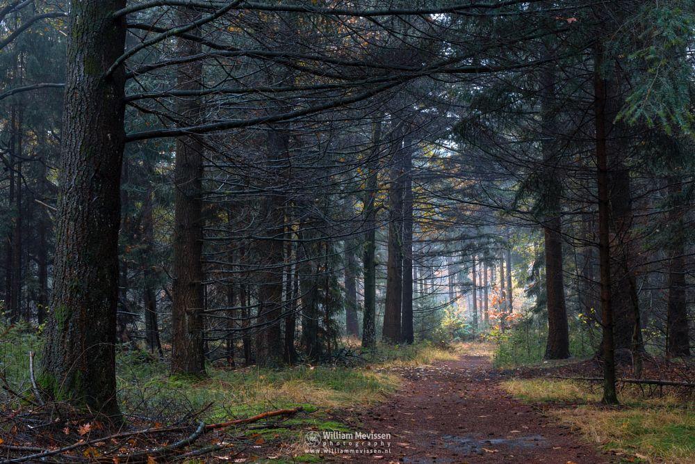 Photo in Nature #venray #merselo #overloon #forest #ballonzuil #limburg #noord-limburg #nature #ballonzuilbossen #woods #ballonzuilbos #autumn #tree #trees #path #grasses