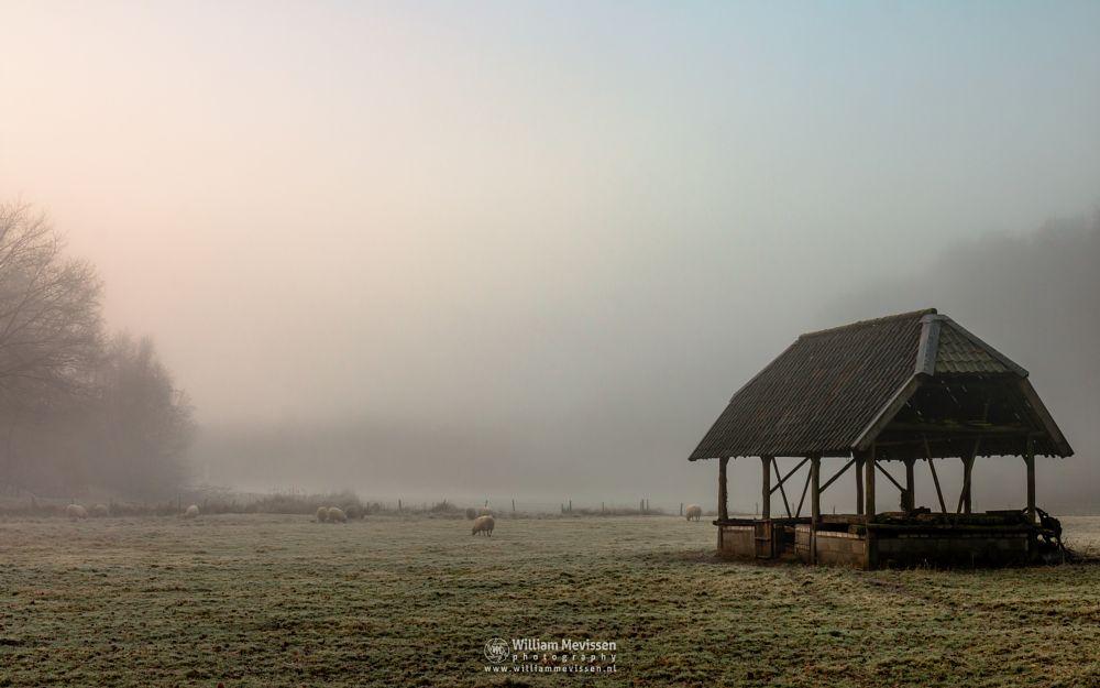 Photo in Landscape #geijsteren #venray #oostrum #landgoed geijsteren #limburg #noord-limburg #nature #forest #geysteren #winter #mood #mist #sheep #sheepfold #sunrise