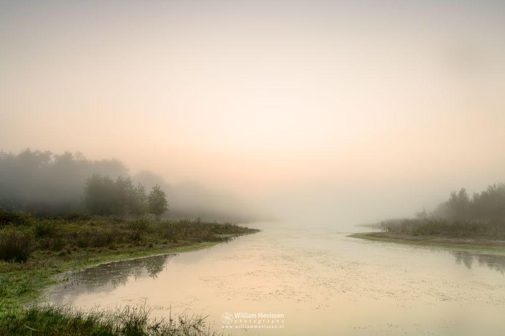 Photo in Landscape #bergerheide #trees #fen #maasduinen #limburg #bergen #nature #light #mist #mood #lelieven #sunrise #sunlight #noord-limburg #nieuw-bergen