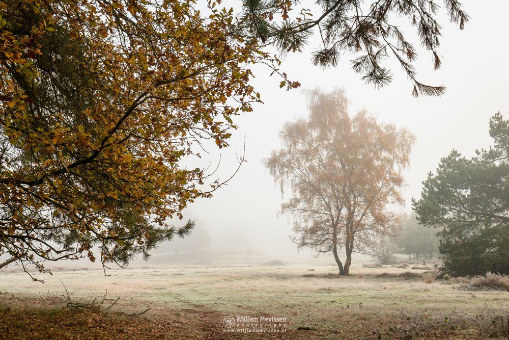 Photo in Nature #bergerheide #forest #maasduinen #limburg #nature #mist #mood #autumn #winter #light #bergen #nieuw-bergen #noord-limburg #woods #frost #path #tree #birch