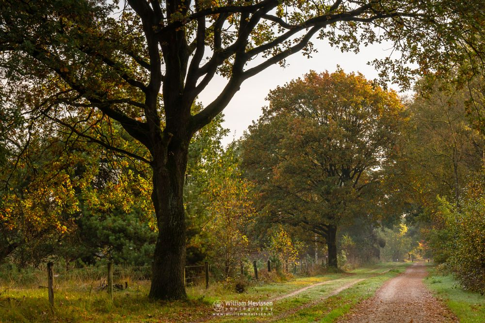 Photo in Nature #bergerheide #forest #woods #maasduinen #limburg #noord-limburg #nieuw-bergen #bergen #light #sunrise #autumn #path