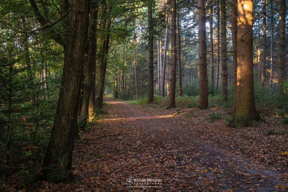 Photo in Random #geijsteren #landgoed #limburg #nature #noord-limburg #geysteren #trees #path #woods #forest #light #mood #landgoed geijsteren #oostrum #venray #]