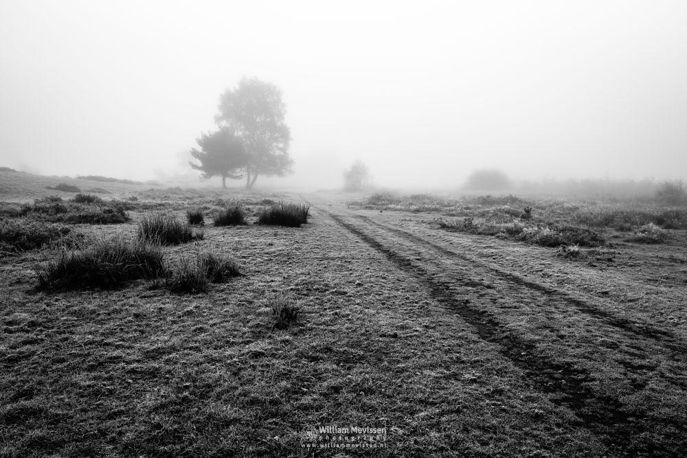 Photo in Black and White #blackandwhite #zwartwit #bw #autumn #winter #path #frost #nature #mist #mood #light #limburg #nieuw-bergen #bergen #maasduinen #bergerheide #noord-limburg