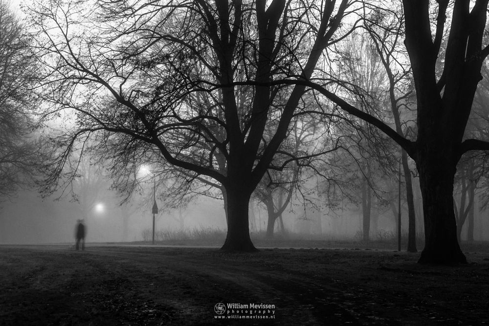 Photo in Black and White #mist #limburg #noord-limburg #annaterrein #venray #annapark #nature #historical #psychiatric #hospital #heritage #decay #blackandwhite #bw #mysterious #tree #trees #silhouttes