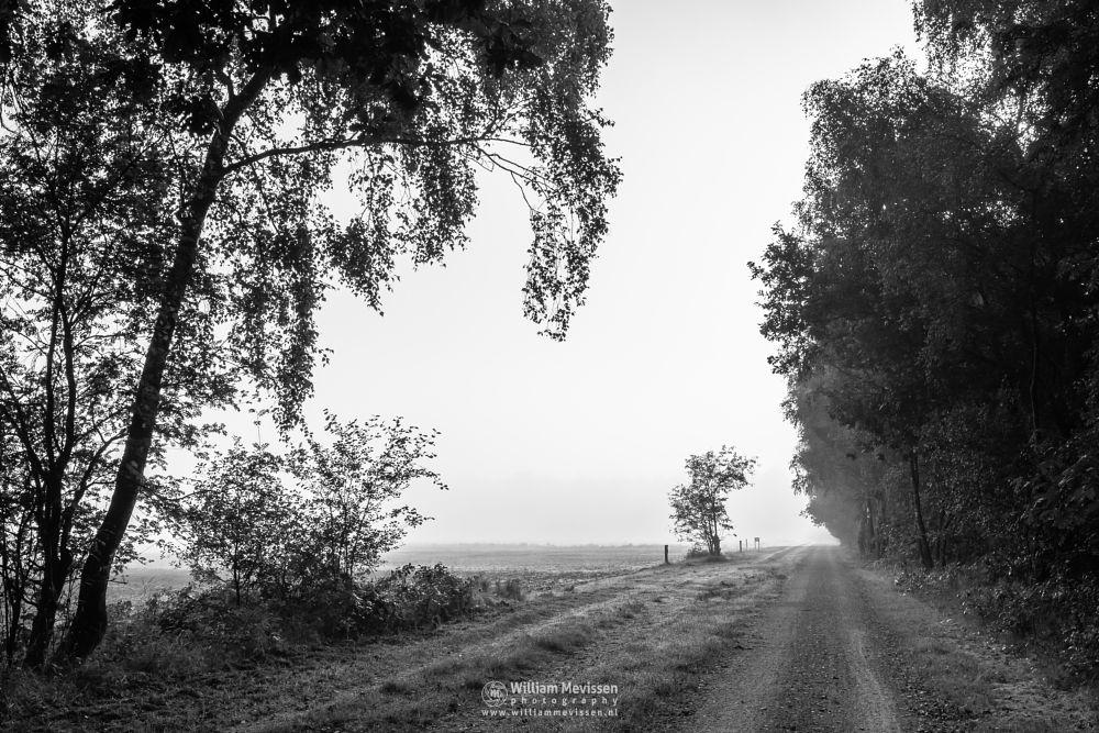 Photo in Black and White #bergerheide #maasduinen #limburg #noord-limburg #nieuw-bergen #bergen #mist #mood #sunrise #blackandwhite #summer #nature #light #trees #forest