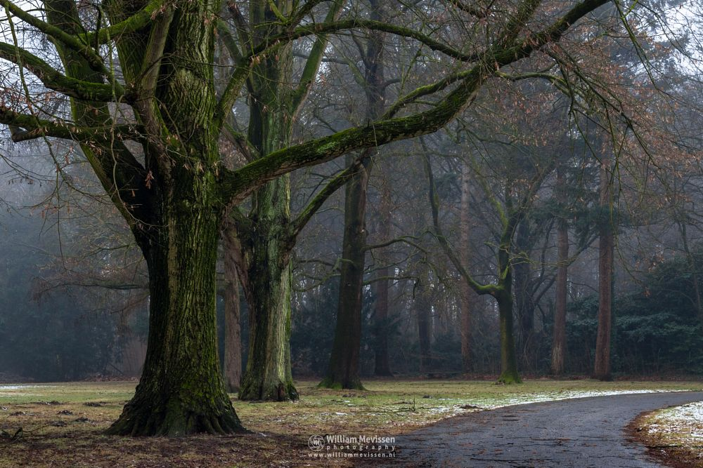 Photo in Nature #mist #limburg #noord-limburg #venray #annaterrein #annapark #nature #historical #heritage #winter #frost #forest #trees #path #snow #b